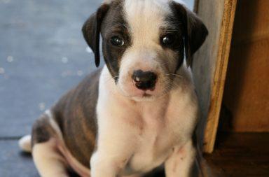 hond-hondenhok